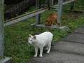 Cats of Houtong, #9173
