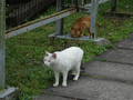 Cats of Houtong, #9174