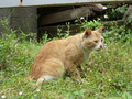 Cats of Houtong, #9177