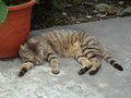 Cats of Houtong, #9179