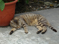 Cats of Houtong, #9180