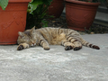 Cats of Houtong, #9181