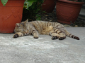 Cats of Houtong, #9183