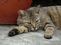 Cats of Houtong, #9184
