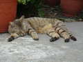 Cats of Houtong, #9185