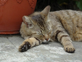 Cats of Houtong, #9186