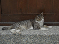 Cats of Houtong, #9188