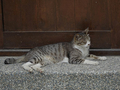 Cats of Houtong, #9189