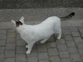 Cats of Houtong, #9190