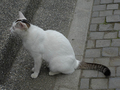 Cats of Houtong, #9195