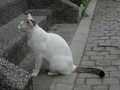 Cats of Houtong, #9196