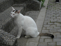 Cats of Houtong, #9197