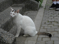 Cats of Houtong, #9198