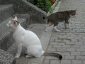 Cats of Houtong, #9199