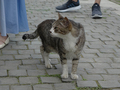Cats of Houtong, #9200
