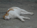 Cats of Houtong, #9202