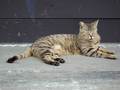 Cats of Houtong, #9203