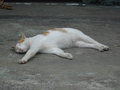 Cats of Houtong, #9204