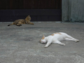 Cats of Houtong, #9205