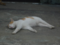 Cats of Houtong, #9206