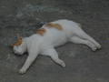 Cats of Houtong, #9207