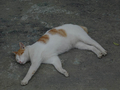 Cats of Houtong, #9208