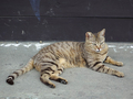 Cats of Houtong, #9209