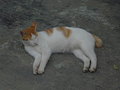 Cats of Houtong, #9210