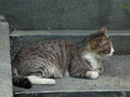 Cats of Houtong, #9212