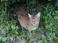 Cats of Houtong, #9222