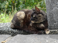 Cats of Houtong, #9240