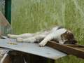 Cats of Houtong, #9255