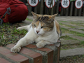 Cats of Houtong, #9299