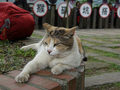 Cats of Houtong, #9300