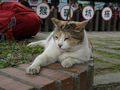 Cats of Houtong, #9301