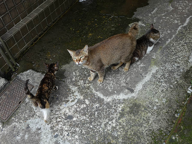 Cats of Houtong, #9318