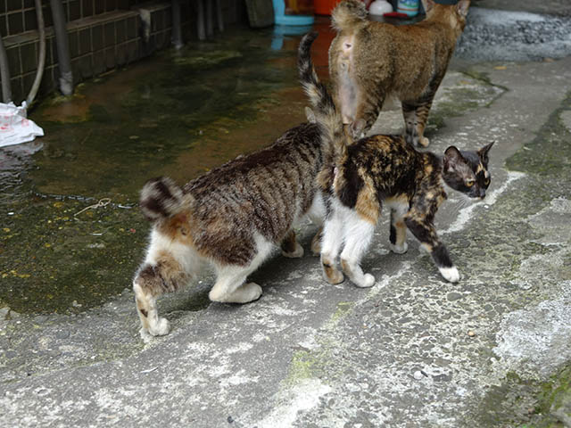Cats of Houtong, #9319