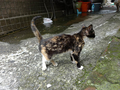 Cats of Houtong, #9320
