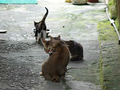 Cats of Houtong, #9321