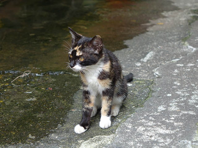 Cats of Houtong, #9322