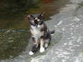 Cats of Houtong, #9324