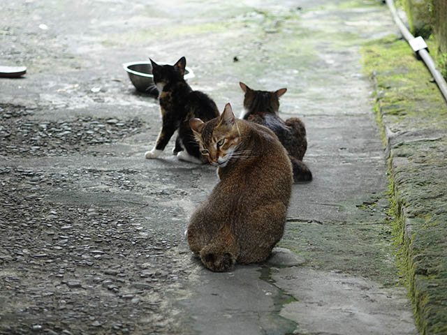 Cats of Houtong, #9327