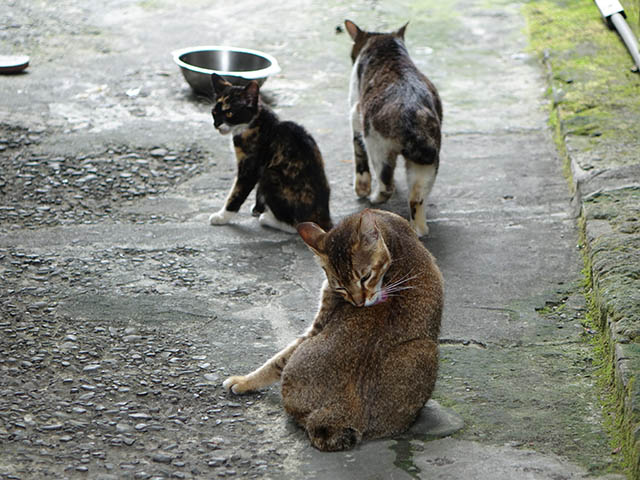Cats of Houtong, #9329