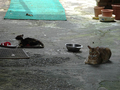 Cats of Houtong, #0036