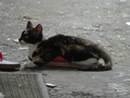 Cats of Houtong, #0039
