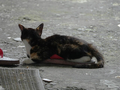 Cats of Houtong, #0042