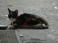Cats of Houtong, #0044