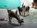 Cats of Houtong, #0045