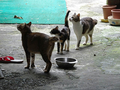 Cats of Houtong, #0046
