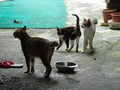 Cats of Houtong, #0047